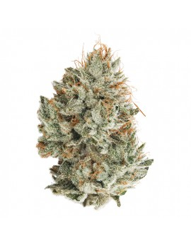 NY Diesel Green house - 11%