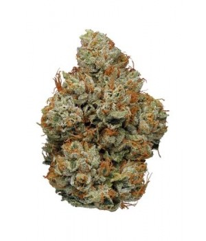 Orange Bud - 7% CBD
